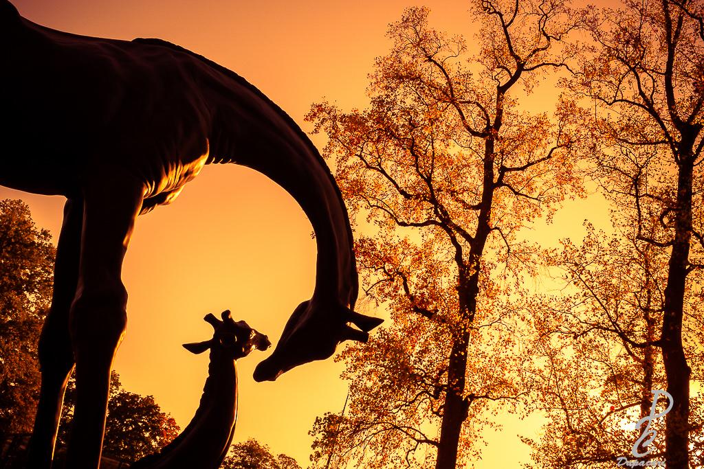 tirage photographie Lyon haute qualité Dapacari photo depuis le parc de la tête des girafes scupture de  damien colcombet ambiance savane