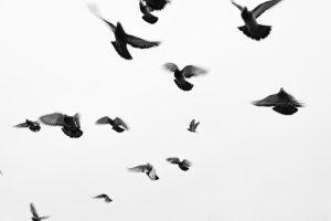 noir et blanc en photo livre